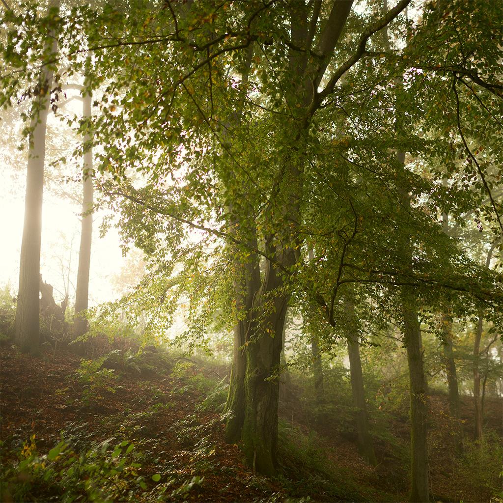 Vorschau-Wald