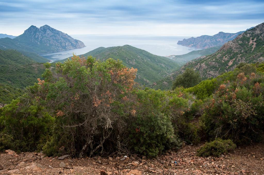 Korsika  - Golfe de Girolata